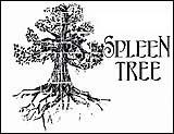 Spleen Tree